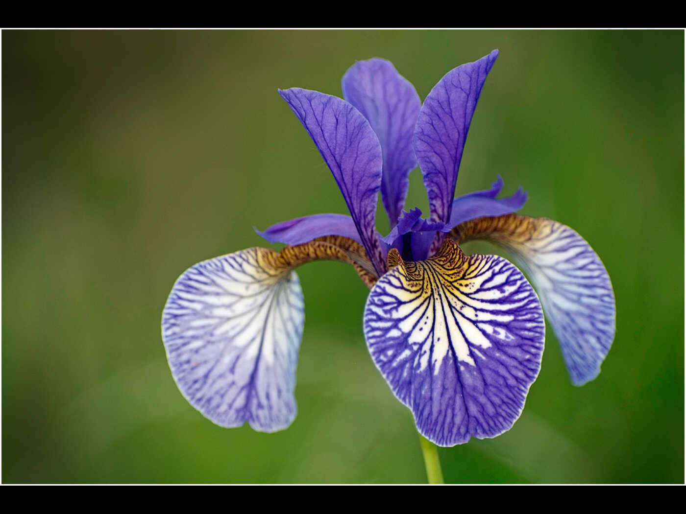 Bob Robinson-Iris-Very Highly Commended.jpg