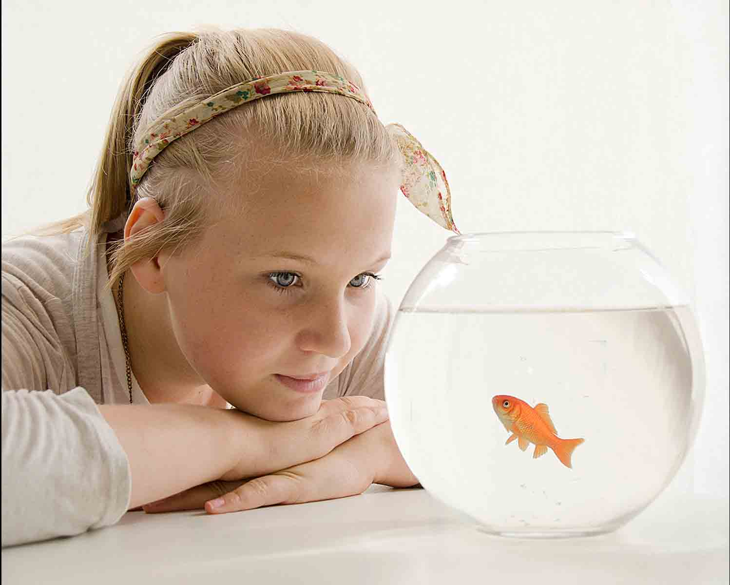 11. Goldfish Fascination.jpg