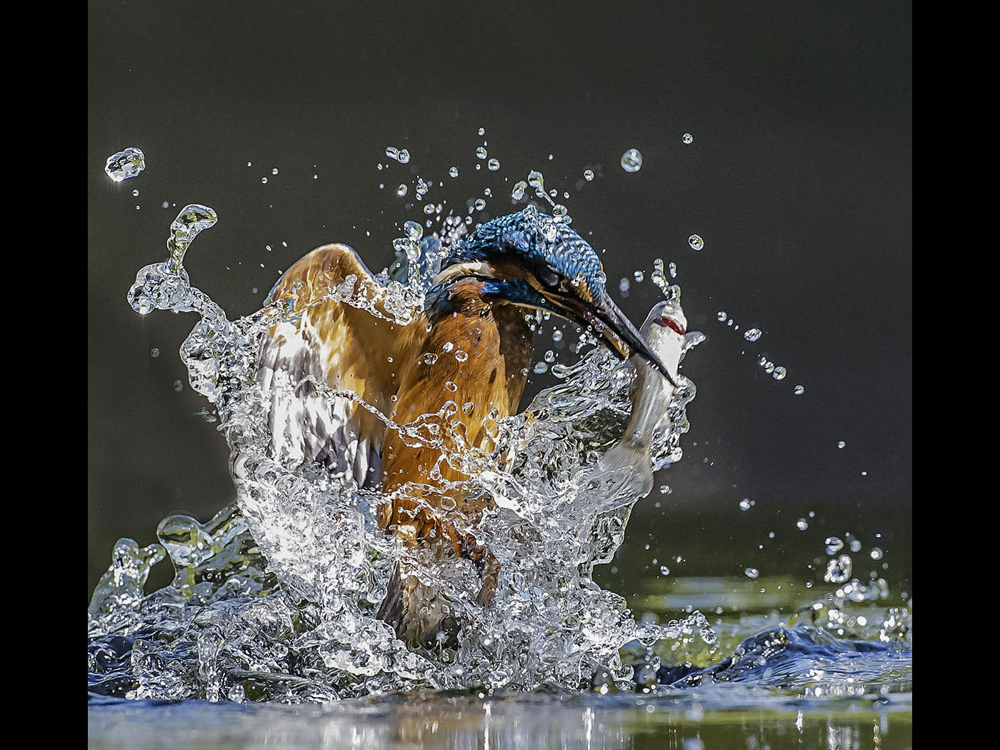7_Kingfisher.jpg