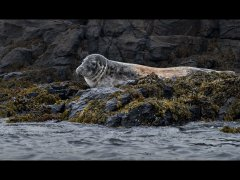John Roberts CPAGB BPE1-Common seal-Very Highly Commended.jpg