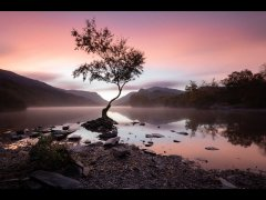 Bill Rigby-Lone Tree-Highly Commended.jpg