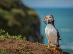 Christine Johnson-Posing Puffin-Highly Commended.jpg