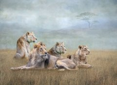 Lynda Haney-African Pride-Very Highly Commended.jpg